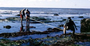 TPERP volunteers doing a survey during low tide - NPS Photo